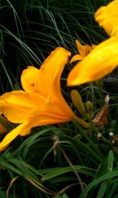 Flower.(: