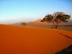 Namib tree - Namibia