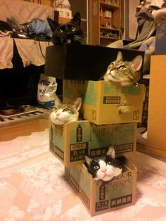 If we all fits, we all sits! - Imgur