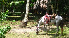 Santa+Marta,+Colombia Santa Marta, Horses, Animals, Colombia, Animales, Animaux, Animal, Animais, Horse