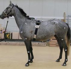 horse sensors - Google Search