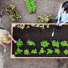 A nice, big planting box is just the thing for summer veggies, herbs, and flowers. See how to make one in a few simple steps