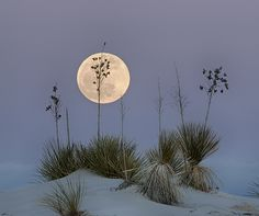 (:-) Moon at White Sands