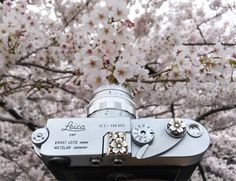 Sakura, Sakura, Sakura… and Sakura Leica (^з^)-☆Handcrafted by Jay Tsujimurahttp://www.shopjay.com/products/detail.php?p