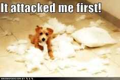 Cute and funny pictures of animals Funny pets behaving badly. Cute Puppies, Cute Dogs, Dogs And Puppies, Doggies, Cute Animal Photos, Animal Pictures, Animals Photos, Dog Photos, Funny Dogs