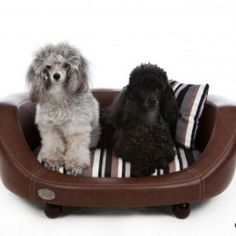 The Oxford II from Chester & Wells is a faux leather material dog bed with stylish lines and a gorgeous soft cushion and pillow. SALE NOW ON