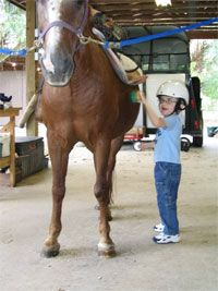 Full Circle Therapeutic Riding Center Palm City Florida