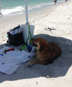 Tucker (a.k.a, Sparky) has a very good life! We are so happy to have him.  He had a very nice six week vacation in Florida this summer.  He just loves the beach and he's great around people.  No worries at all.  We used the crate for a little while when he first came to live with us, but not for long.  Now he has freedom to wander the house.  He's just not too interested in getting into trouble.  Thanks for the good work you guys do at Baypath!  :)