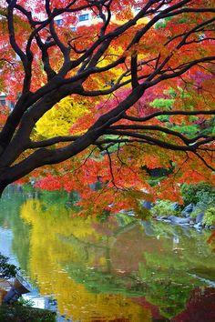 Autumn leaves at Hibiya Park, Tokyo, Japan