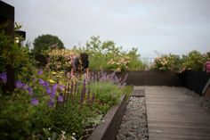 Wooden walkway on a Brooklyn roof. I want to make a path like this to my front door.   Julie Farris Brooklyn Roof Garden | Gardenista
