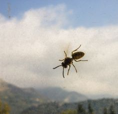 Wasp against the background of a dirty window and montenegro mountains - Оса на фоне грязного окна и черногорских гор