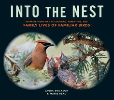 I made some illustrations for this beautiful book for bird lovers.