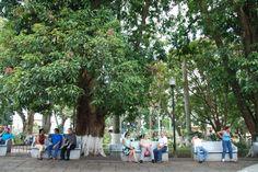 Park in Alajuela
