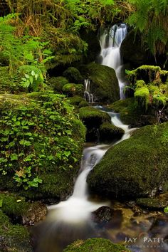 Stream Falls in Redwood National and State Parks, California United States © Unknown