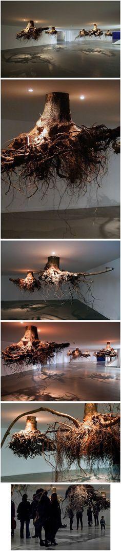 tree roots emerge from the ceiling in an installation by giuseppe licari. Lo encubierto, emerge, el punto de vista se traslada, la abstracción trastorna. Andar entre árboles nunca tuvo tal significado.