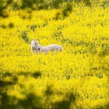 http://pixdaus.com/what-does-spring-smell-like-by-reiner-albrecht-horse/items/view/286710/