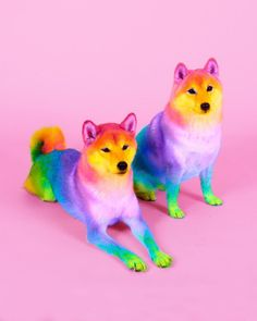 the animals and the bright colors diy funny tattoo bonitos cachorros graciosos Baby Animals Super Cute, Cute Little Animals, Cute Funny Animals, Baby Animals Pictures, Cute Animal Pictures, Animals And Pets, Cute Dogs And Puppies, Baby Dogs, Cute Dogs Breeds