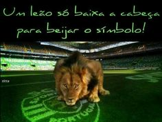 Portugal Soccer, Scp, Lisbon, Football, Green, Sports, Lion Images, Lion Art, Dolphins