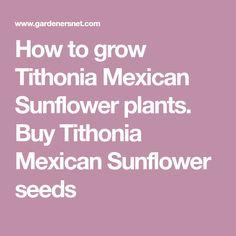 les 25 meilleures id es de la cat gorie mexican sunflower sur pinterest tournesols tournesols. Black Bedroom Furniture Sets. Home Design Ideas