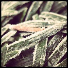 凍てついた世界の中で