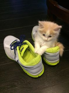 When this teeny kitty decided to keep her human's shoe warm so his toes wouldn't get cold. | 31 Times Cats Made The World A Better Place