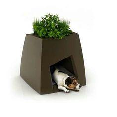 Casa perro