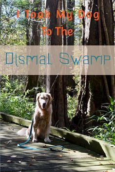 If you love history and nature and your dog loves to run around, visit the Dismal Swamp in Virginia and North Carolina. It's a unique setting. Doodle Your Dog Picks Road Trip With Dog, Road Trip Usa, Usa Roadtrip, Dog Travel, Travel Usa, Travel Tips, Kayaking With Dogs, Great Places To Travel, Dog Sounds