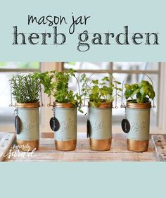 This fall, bring your herbs in with this adorable DIY mason jar herb garden!
