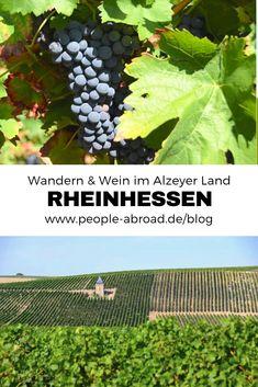 Rheinhessen: Weinreben und Wanderwege, soweit das Auge reicht. In der Region Alzeyer Land