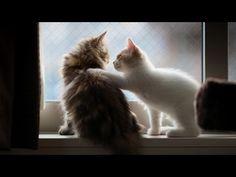「新妻が待ってるぞ。早く帰ってやれ」 ご主人の帰りを待ちわびるネコ様