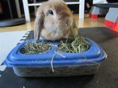 cheap clean hay feeder - BinkyBunny.com - House Rabbit Information Forum - BinkyBunny.com - BINKYBUNNY FORUMS - DIET & CARE