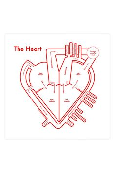 A graphic heart meets the anatomical version in this sweet print from Archie's Press. Dimensions: Measures x Details: Letterpress. Archie Archambault is a designer and inventor living between P Pa School, Medical School, Med Student, Cardiac Nursing, Heart Map, Anatomy And Physiology, Brain Anatomy, Human Anatomy, Respiratory Therapy