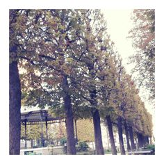 Moi, j'aime bien l'automne. Je le kiffe,  même.  #automne #blog #frenchblogger #blogueuse #goodvibes