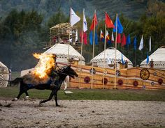 Ultimate Guide to Nomad Games