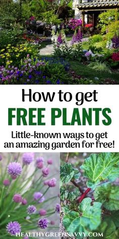 You don't need to pay a fortune for your garden -- you can get so many plants for FREE. Here's how to save a bundle on garden plants. #plantdivisions #gardeningtips #frugal  #perennial #frugalgardening #savemoney Free Plants, Cool Plants, Garden Guide, Garden Paths, Herb Garden, Gardening For Beginners, Gardening Tips, Green Living Tips, Home Vegetable Garden
