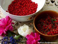 Redcurrants for Frozen Yogurt