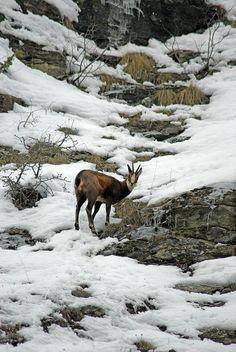 Bardonecchia #Alps #Italy | Discover this place -> www.gadders.eu/destination/place/Bardonecchia