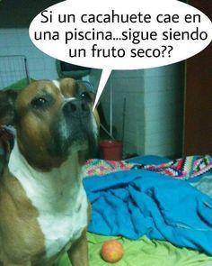 Jajaja Dog-Fucio ... #memes #chistes #chistesmalos #imagenesgraciosas #humor www.megamemeces.c...