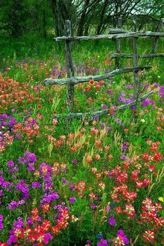 Rustic fence surrounded by Texas wild flowers