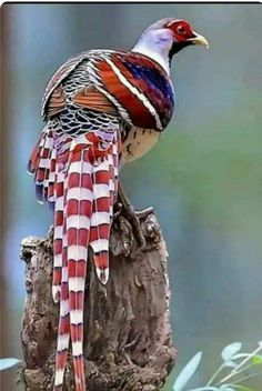 Publication de Nature and beauty Rare Birds, Exotic Birds, Colorful Birds, Tropical Birds, Pretty Birds, Beautiful Birds, Animals Beautiful, Animals And Pets, Cute Animals