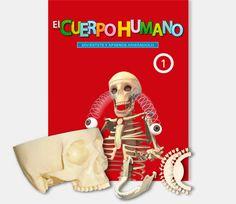 Construye una magnfica reproduccin a tamao real del esqueleto