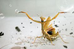 Nature looks stunning through Macro Photography   Graphic Art News