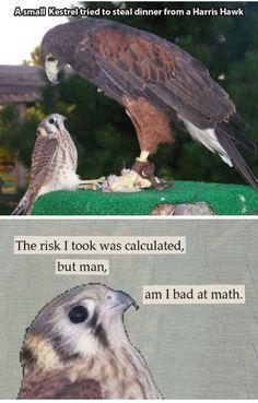 Funny, humor