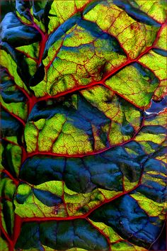 Lifeblood ~ swiss chard macro by Leenda K