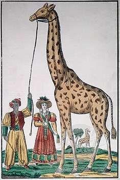 HISTOIRE - première girafe de France offerte à Charles X par Méhémet-Ali. Un destin extraordinaire, du Soudan à la ville des Lumières en passant par l'Egypte, pour un girafon autant choyé qu'étudié qui lança à Marseille puis à Paris une véritable girafomania qui toucha plus ou moins tous les arts, de la peinture à la gravure, des lettres à la mode féminine.