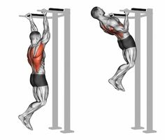 Reverse grip pull-ups on the back muscles. Reverse grip pull-ups on the back muscles. Exercising for bodybuilding Target muscles are marked in red vector illustration Pull Up Workout, Gym Workout Tips, Good Back Workouts, Back Exercises, Aerobic Exercises, Forma Fitness, Fitness Bodybuilding, Weight Training Workouts, Aerobics Workout