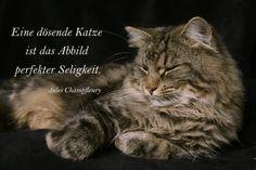 Seligkeit der Katzen