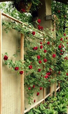 DIY Rose Trellis - I'd like to do this on the west side of the house to help keep it cool in the summer