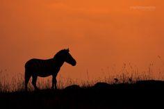 A zebra enjoying sunset at Elephant Pepper Camp.  Image by Mario Moreno