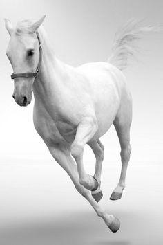 Beautiful white runner